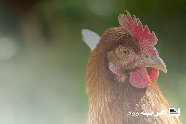 علاج جدري الدجاج بالثوم
