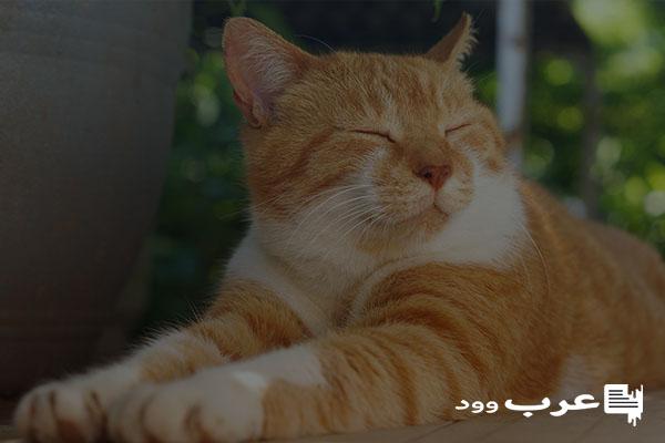 لماذا تنام القطط كثيرا